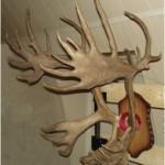 Woodland Caribou - Ron Mcdonald